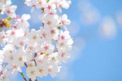 🌸2017春のデート情報🌸~犬山・小牧・安城・瀬戸~