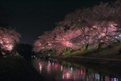 2018✿お花見デート情報~岡崎の桜まつり~