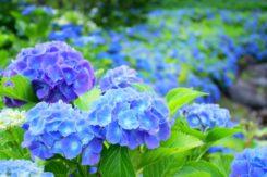 初夏のお花見スポット