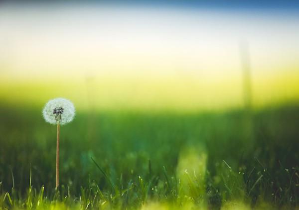 bloom-1851461_640